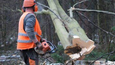 """Photo of Wycinają las. Do końca lutego utrudnienia na """"siódemce"""""""