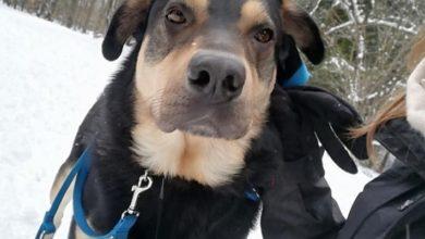 Photo of Bruno z Psiej Przystani. Adoptuj psa!