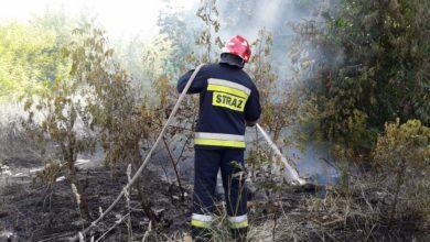 Photo of Za wypalanie traw grozi nawet 10 lat więzienia