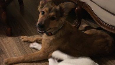 Photo of Psie rodzeństwo z lidzbarskiego przytuliska