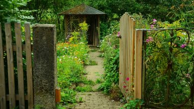 Photo of Ciechanów: Mija termin zgłaszania ogrodów do miejskiego konkursu
