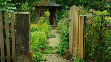 Photo of Ogródki działkowe w naszym regionie z dofinansowaniem