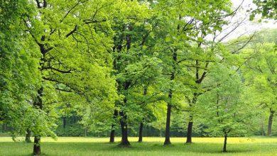 Photo of W Sierpcu ma pojawić się siedemset nowych drzew