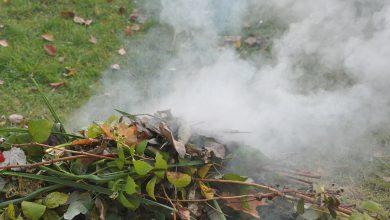 Photo of Mława: Mandaty za palenie liści
