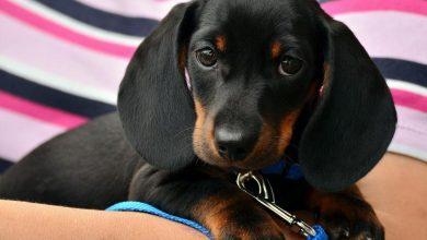 Photo of Za adopcję psa przasnyski ratusz oferuje fachowe szkolenie