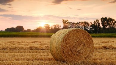 Photo of Rolnicy z gminy Szydłowo za darmo pozbędą się odpadów