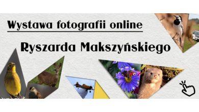 Photo of Działdowo: Biblioteka rozpoczyna wystawę on-line fotografii Ryszarda Makszyńskiego