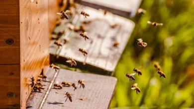 Photo of Przasnyski ratusz inwestuje w pszczoły