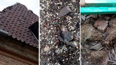Photo of W Ciechanowie zniszczono gniazda jerzyków. Trwa śledztwo policji