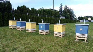 Photo of Przasnyskie pszczoły niedługo zaczną pracę