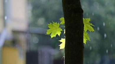 Photo of Sierpecki ratusz zaprasza ojców do sadzenia drzew