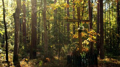 Photo of Grupa wędrowców pozna nową trasę w parku krajobrazowym