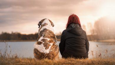 Photo of Adopcja psów dofinansowywana przez gminę Iłowo-Osada