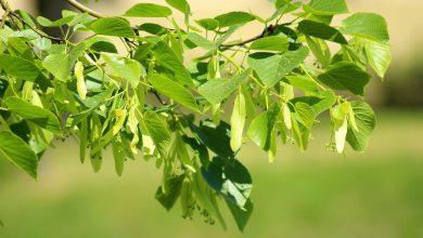 Photo of Drzewkiem można uczcić narodziny dziecka