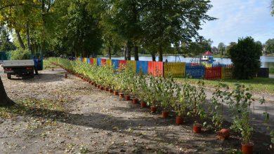 Photo of Dereniowe krzewy ozdobią Jeziórka
