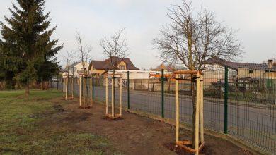Photo of Nasadzenia zakończone. 100 tysięcy złotych na drzewa w gminie Strzegowo