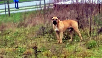 Photo of Właściciel groźnego psa z zarzutami