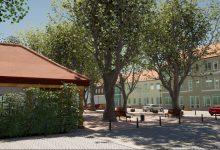 Photo of Konsultacje w sprawie drzew na przasnyskim rynku