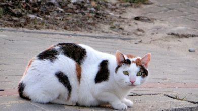 Photo of Domki dla kotów w mławskiej przestrzeni miejskiej