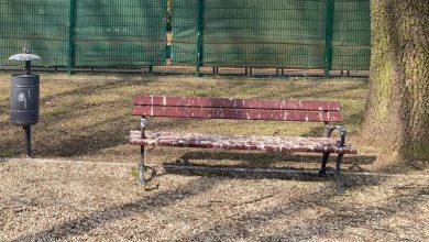 Photo of Gawrony i kawki problemem w mławskim parku
