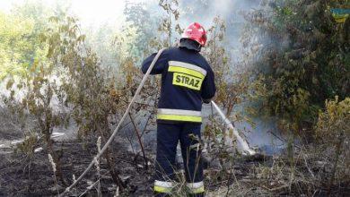 Photo of Mandat i pozbawienie dopłat za wypalanie traw